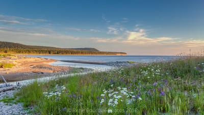 HDR-embouchure ruisseau Capelans, fleurs