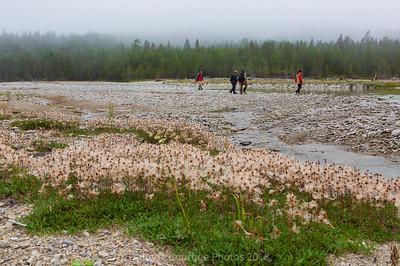 excursion-rivière-patate-fleur