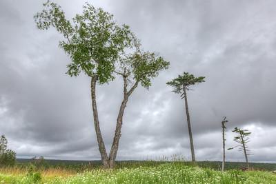 HDR de silhouettes d'arbres dans le bucher de Corneille, île Anticosti