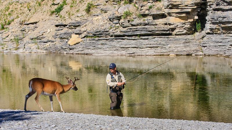 Salmon, fisherman, deer, Jupiter River, anticosti