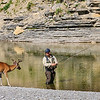 Salmon, fisherman, deer, Jupiter River, anticosti
