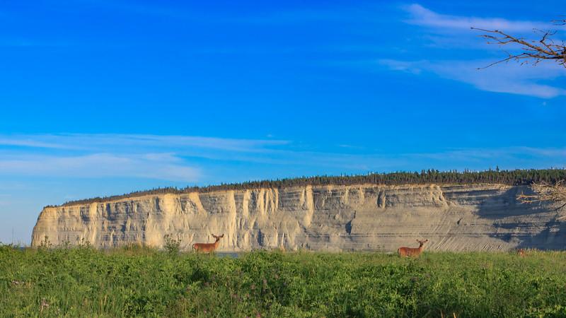 Deer by the cliff of Baie-de-la-Tour, Anticosti national park