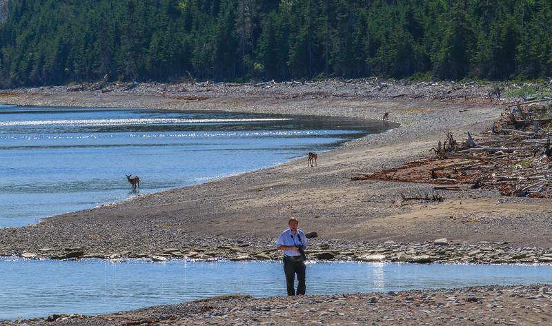 Deer on the beach, photo safari Anticosti, photographer