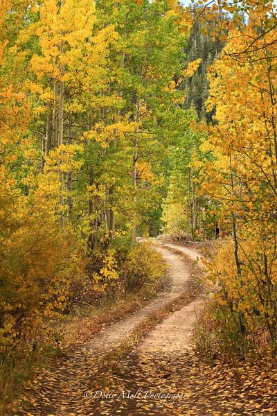 Autumn Pallette