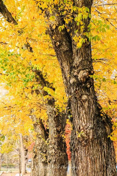 Riverside Sentinels in Fall