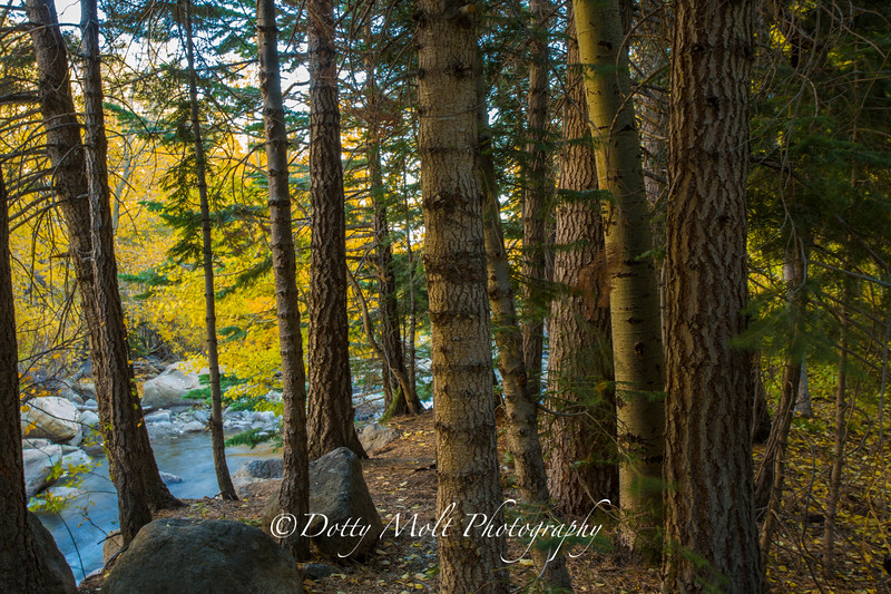 West Fork Carson River