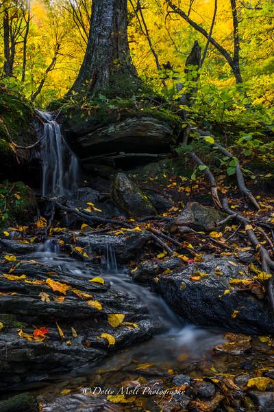 Elf Creek