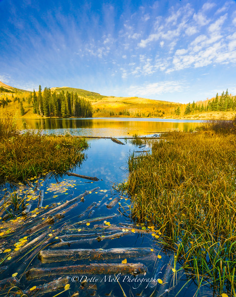 Logged in Colorado