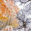 When Seasons Collide