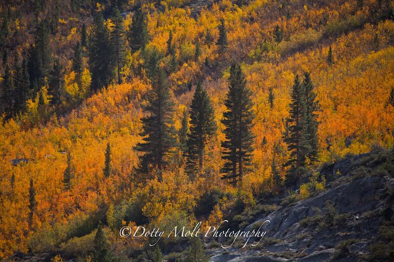 Brilliant Colors Closeup, Bishop, Ca