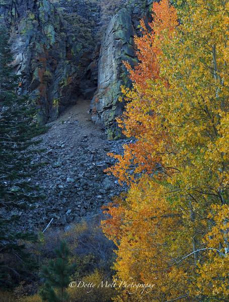 Thimas Creek Canyon Color