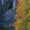 Thimas Creek Canyon Color