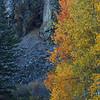 Thomas Creek Canyon Color