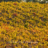 Bray Vineyards Wallpaper Amador County