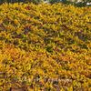 Bray Vineyards Wallpaper Amador County