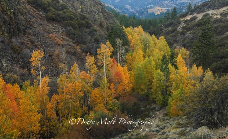 Thomas Creek Canyon