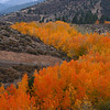Thomas Creek Fall Color Mt. Rose