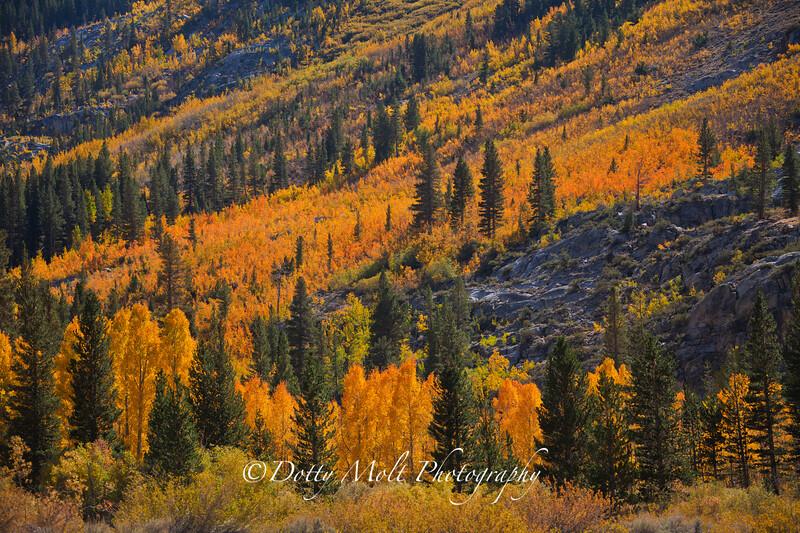 Brilliant Fall Colors, Bishop, CA