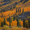 Brilliant Fall Colors, Bishop, California