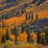Brilliant Fall Colors, Bishop, California