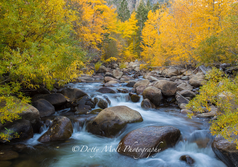 West Fork of the Carson River in Autumn Glory