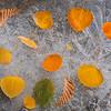 Autumn on Ice 2