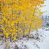First Snow Thomas Creek