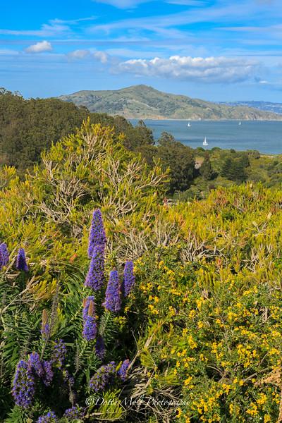 Sausalito from the Golden Gate Bridge, California