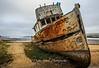 Washed Ashore Tomales Bay
