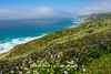 Point Reyes National Seashore Iris