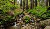 Ewoldsen Creek Trail, Big Sur, California