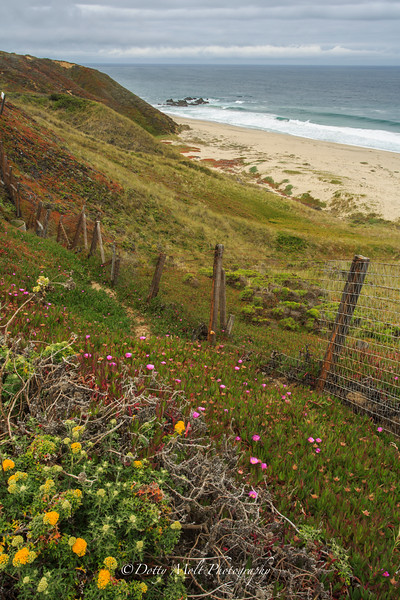 Wildflowers along the Big Sur Coastline Fenced out