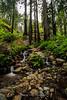 Creek Along Ewoldsen Trail winding through a redwood forest