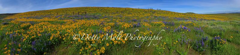 Columbia Hills Meadow