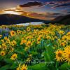 Sunrise Sunstar