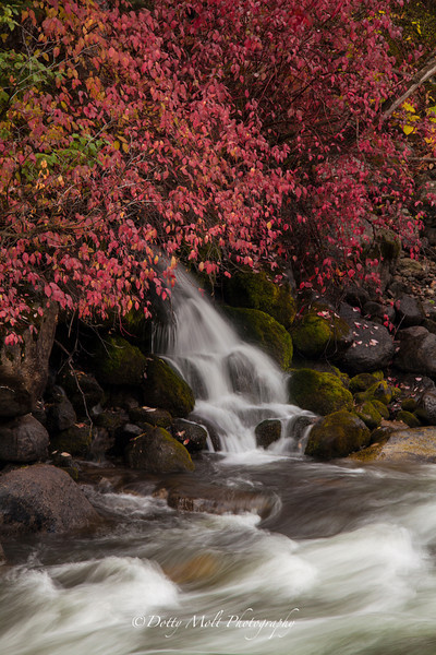 Tiny waterfall along the Salmon River