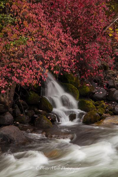 Tiny waterfall along the Salmon River