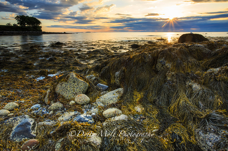 Samoset Shoreline Sunrise