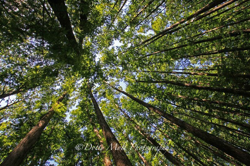 Towering Trees HHSP 2