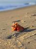 Conch Spirals