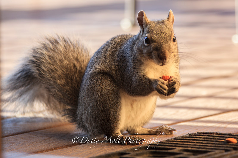Rocky the Tree Squirrel 1