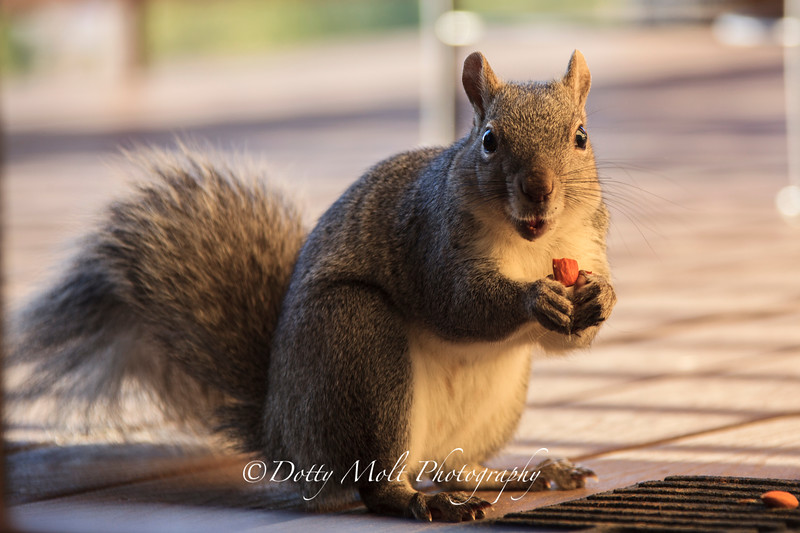 Rocky the tree squirrel 2