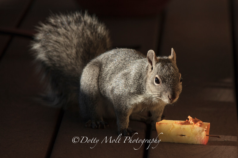 Rocky the tree squirrel 3