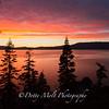 Backlit Trees at Sunset, Lake Tahoe East Shore, NV