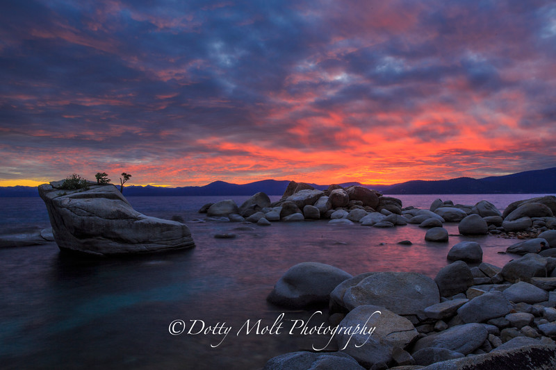 Bonsai Sunset, Lake Tahoe, NV
