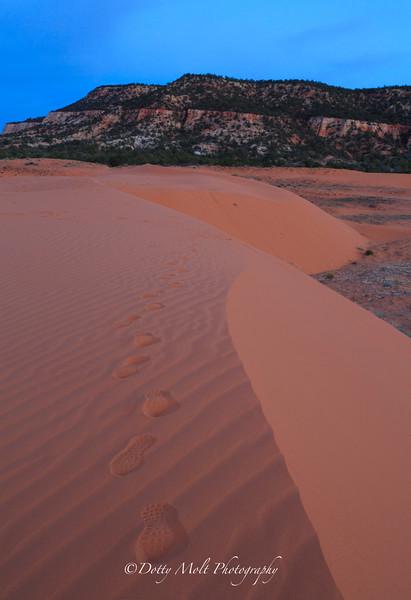 Coral Pink Sand dunes Wild Photographer tracks