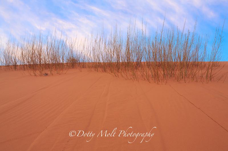 Coral Pink Sand Dunes Dawn