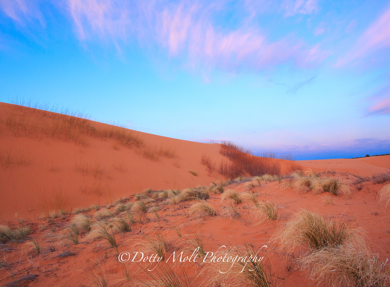 Coral Pink Sand Dunes Grass