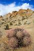Alabama Hills Cactus