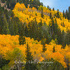 Aspens at Peak